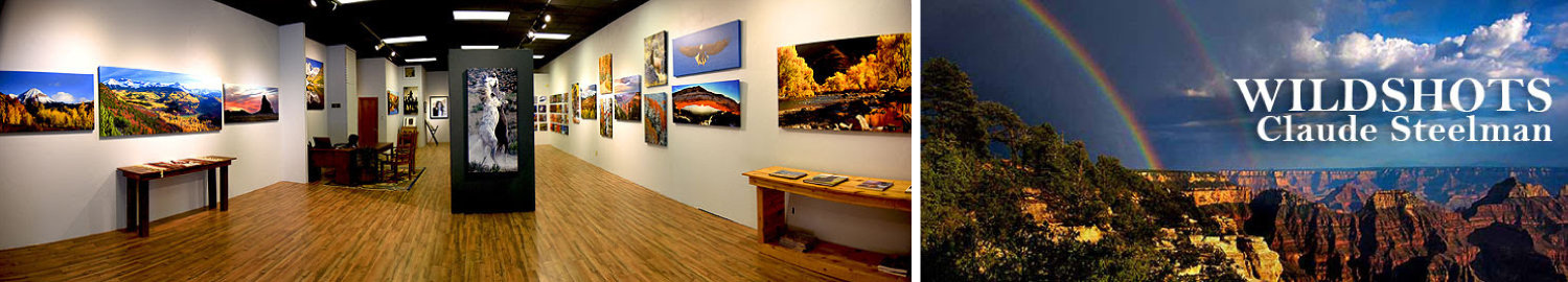 Wildshots Gallery, Featuring the Photography of Claude Steelman