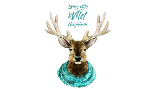Living with Wild Neighbors: Durango's Wildlife